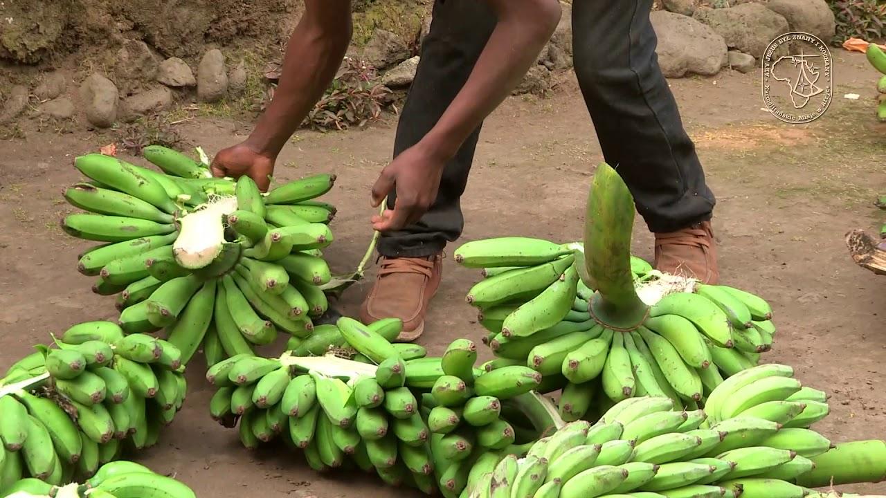 Rwandyjskie piwo bananowe